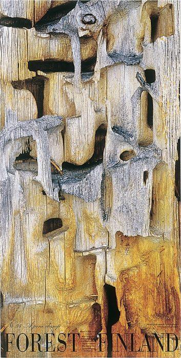 ff34_pine_stump