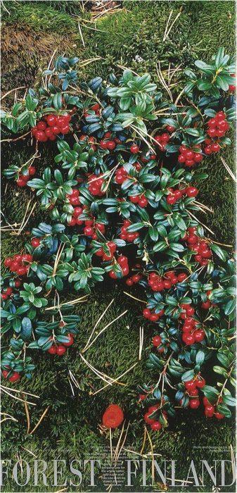 forestfinland33uusi